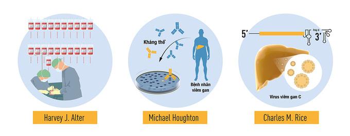 Tóm tắt quá trình ba nhà khoa học khám phá              ra virus viêm gan C. Ảnh: Nobel Prize